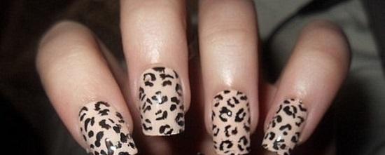 leopard-nokti