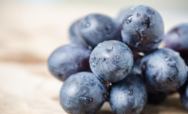 resvaratrol antioksidant